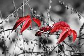 Red autumn — Stock Photo