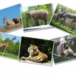 Bunch of animals photographs — Stock Photo #6615622