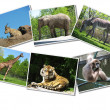 Bunch of animals photographs — Stock Photo