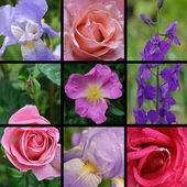 Collage of flower photos — 图库照片