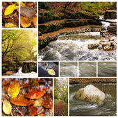 Collection of autumn photographs — Stock Photo