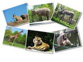 Bunch of animals photographs — Stock Photo
