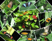 Collection of butterfly photographs — Stock Photo