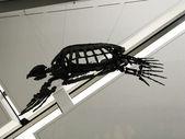 Skeleton of turtle — Stock Photo