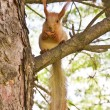 Squirrel - Stockfoto