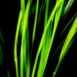 Abstract green background — Stockfoto