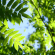 Incredible green leaf foliage — стоковое фото #5939909
