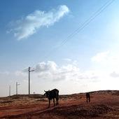 пустыня корова — Стоковое фото
