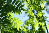 信じられないほどの緑の葉の葉 — ストック写真
