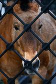 Cavallo triste — Foto Stock