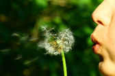 Dandelion wish — Stock Photo
