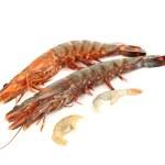 Fresh shrimps — Stock Photo #5972194