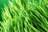 Gräs natur bakgrund — Stockfoto