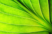 Green leaf macro texture — Stock Photo