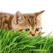 Katt hunter — Stockfoto