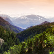 Mountain forest — Stock Photo #6727926