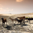 Desert goats — Stock Photo