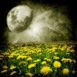 Dandelion field - Stockfoto