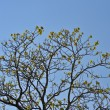 Stock Photo: Crown young spring tree against blue sky