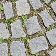Pavement stone tile with grass germination — Stock Photo