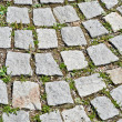 Pavement stone tile with grass germination — Stock Photo #5813632