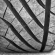 Stock Photo: Tire's pattern