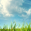 Green lush grass — Stock Photo