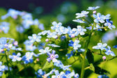 Small blue flower — Stock Photo
