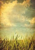 Retro photo meadows with grass — Stock Photo