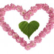 Green sheet in heart from pink roses on a white background — Stock Photo #6084909