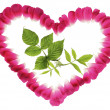 A green sprout in heart from red petals on a white background - Foto Stock