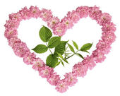 A green sprout in heart from pink roses on a white background — Stock Photo