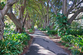Ogród botaniczny — Zdjęcie stockowe