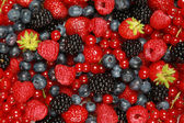 Berry Mix — Foto de Stock