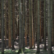 Brushwood in forest — Stock Photo