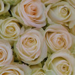 White roses — Stock Photo #6163201