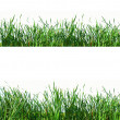 Stock Photo: Grass design