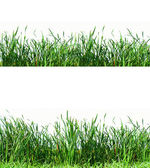 Grass design — Stock Photo