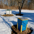 Bee hives in spring. — Stock Photo #5630053