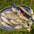 Royalty-Free Stock Photo: Freshly caught fishes.