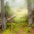Mist in forest — Stock Photo