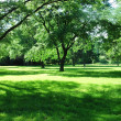 Green park — Stock Photo