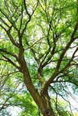 Green treetop — Stock Photo