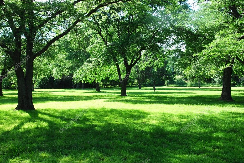 Green park, forest background — Stock Photo #5884151