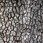 Tree bark texture — Stock Photo #5913773