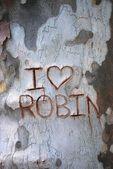 Text on the tree bark texture — Stock Photo