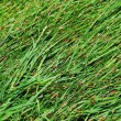 Green grass texture — Stock Photo #6016751