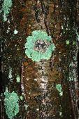 Tree bark texture — Stock Photo