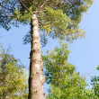 Green treetop — Stock Photo #6116276