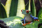 Smiling Frog — Stock Photo